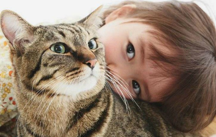 Pisică. Imagine ilustrativă