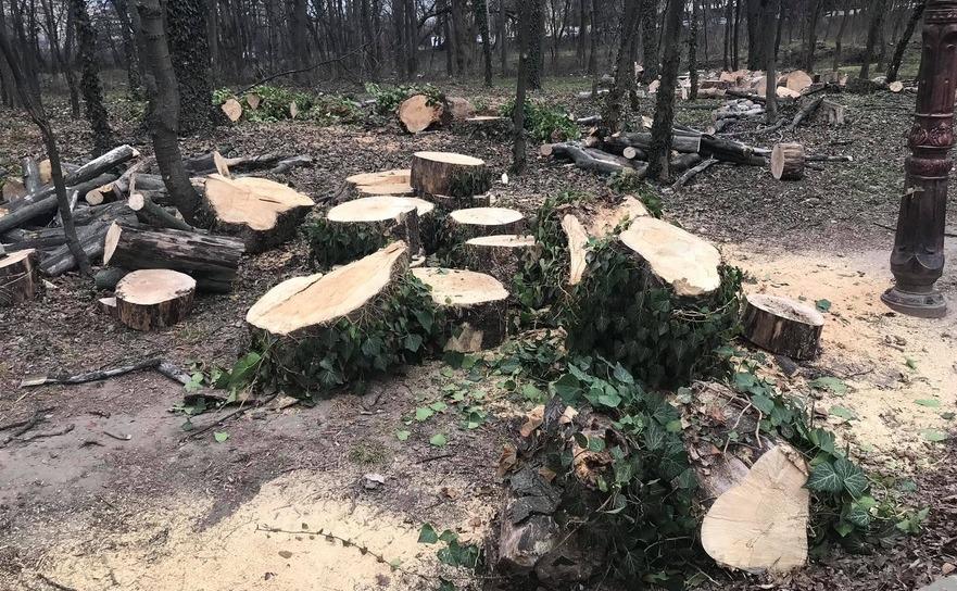 Copaci tăiaţi în Parcul Herăstrău