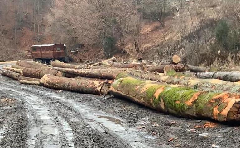 În zona localităţii Nucşoara (jud. Argeş), pe Râul Doamnei şi Valea Cernatului, se taie copaci de o valoare deosebită. Şi pentru pădure, şi pentru profitori...