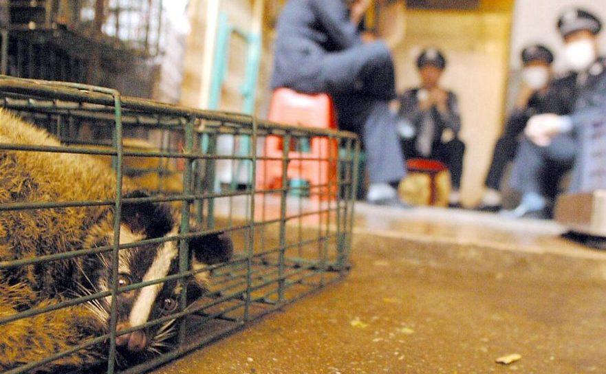 Piaţă de animale vii în Guangzhou, provincia sudică Guangdong, arhivă