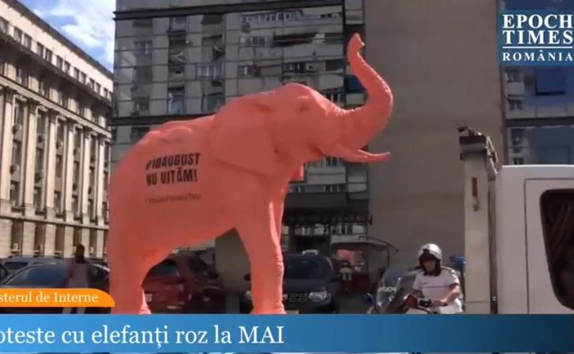 Elefantul roz - dosarul '10 august'